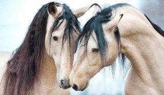 Gibt es eine Art Chat oder Singlebörse speziell für Reiter oder Pferdefreunde?